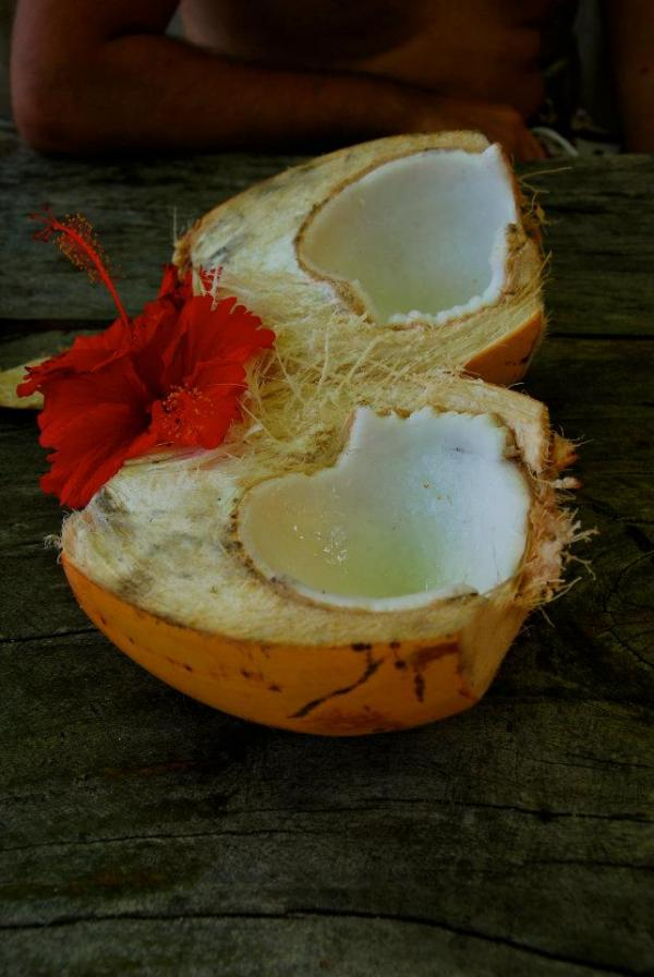 coco seychelles